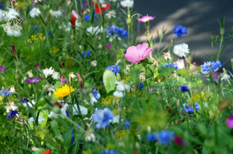 Afbeeldingsresultaat voor bloemen bermen